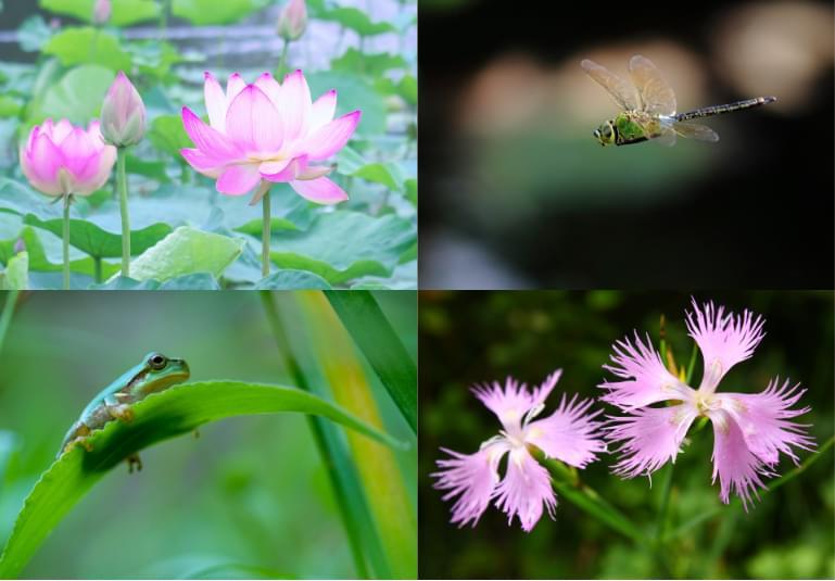 生物多様性コンサルティング